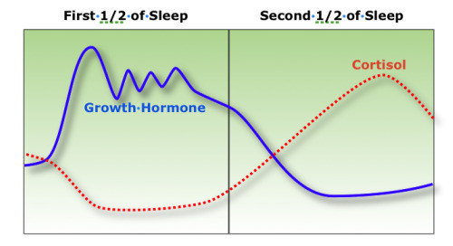 optimized-relation-of-sleep-and-human-growth-hormone